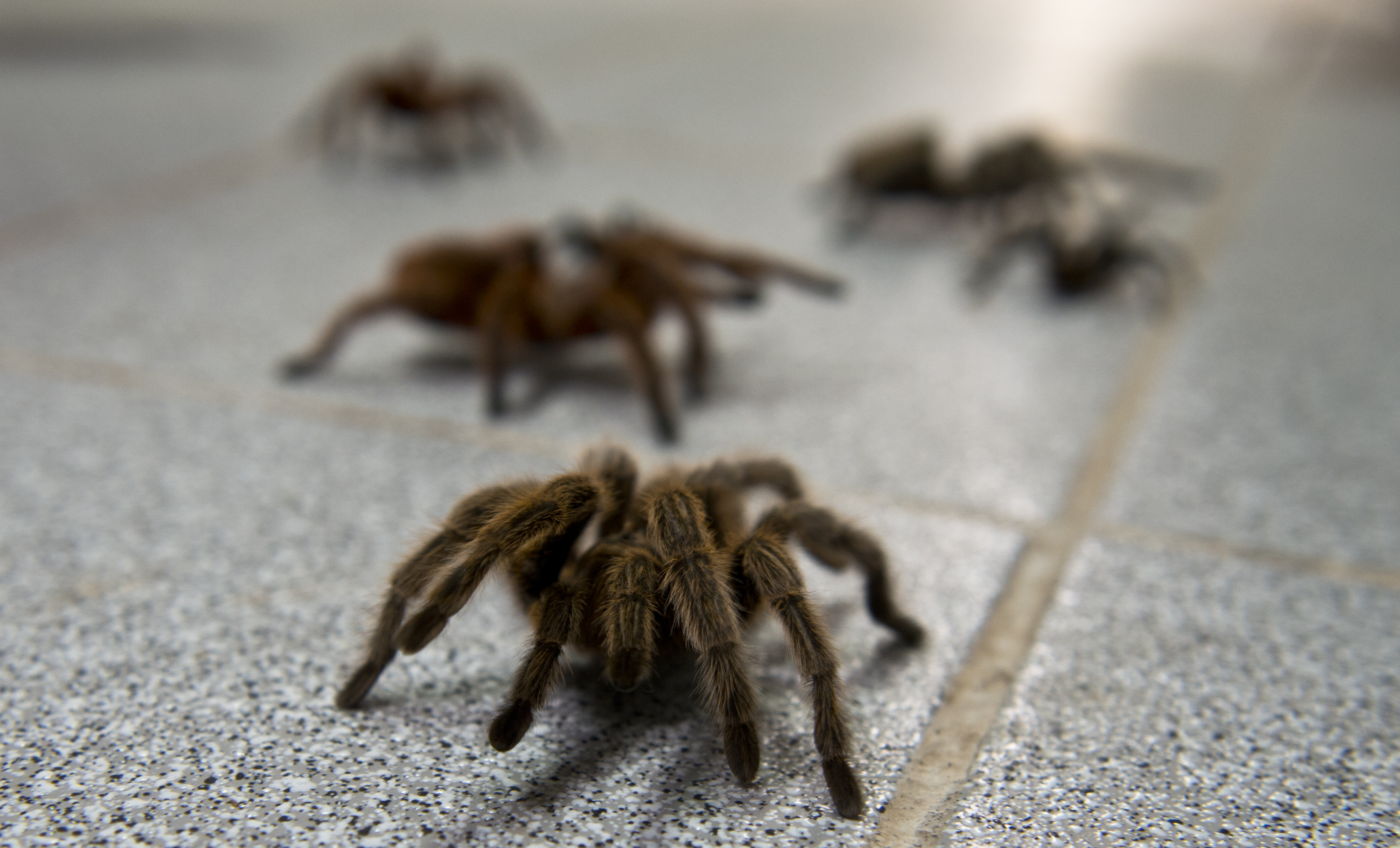 10 things you'll only know if you're afraid of spiders
