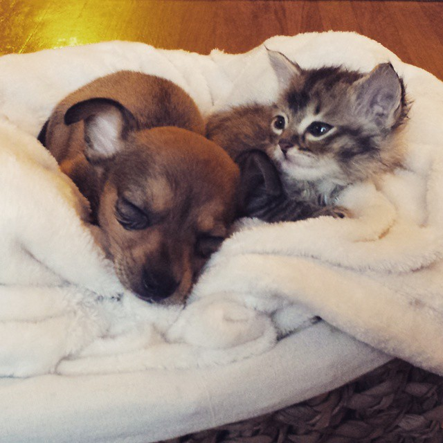Tiny kitten and tiny puppy become super-tiny BFFs and it's adorable