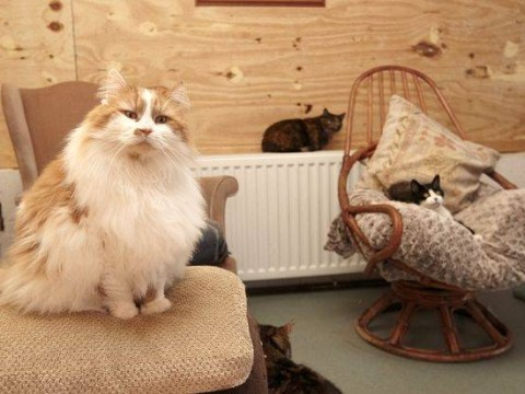 Welcome to the retirement home where all the residents are CATS