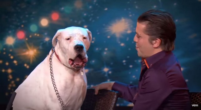 singing dog, Belgium's Got Talent, Lady Xena