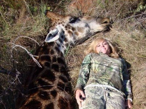 Female hunter receives death threats after posing with dead giraffe