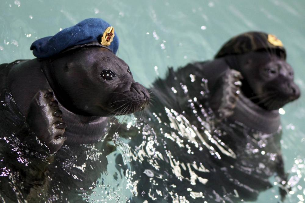 Russia trains actual seals to act like Navy Seals, because ¯\_(ツ)_/¯