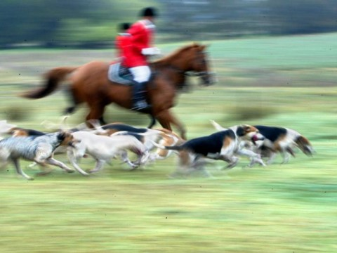 We should never bring back hunting with dogs – and here's why