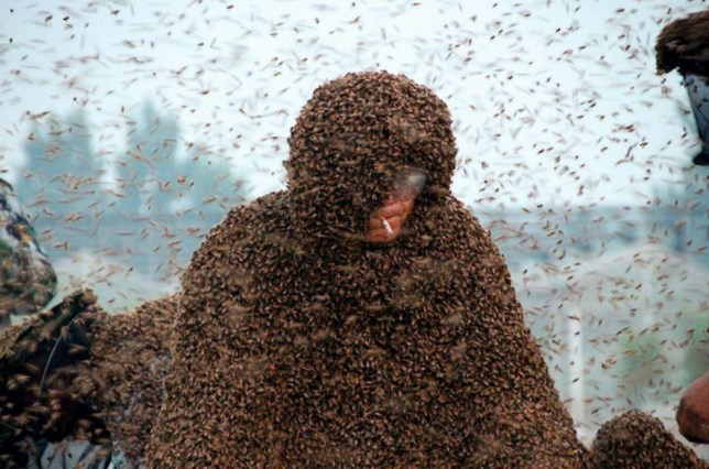 Mandatory Credit: Photo by Imaginechina/REX Shutterstock (4790400h)  Chinese beekeeper Gao Bingguo fully covered with bees  New record for beekeeper covered with one million bees, Tai'an city, Shandong province, China - 25 May 2015  A Chinese beekeeper set a new Guinness World Record after being covered in a massive 109.05kg of bees. Gao Bingguo, 55, is no stranger to bees, having kept them for over 35 years, but having several hundred thousand of them piled on top of you is something that not even Bingguo could truly prepare for. Organizers began the record attempt on early Monday (25 May 2015) morning by placing a number of queen bees on to his body which would help to attract the worker bees. Boxes of bees were later dumped at his feet in increasingly large quantities, slowly crawling up and on to his body. By the end of the attempt Bingguo had about 1.09 million of the insects which weigh about 109.05kg crawling all over him but despite being stung over 2,000 times and his body temperature rising to over 60 degrees Celsius, he managed to survive the ordeal and set a new world record replacing the previous of 85.5kg.