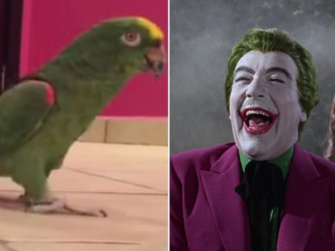 This bird laughs like an evil super-villain and it's super scary
