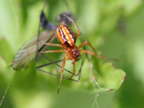 'Extinct' species of spider comes back from the dead after 100 years