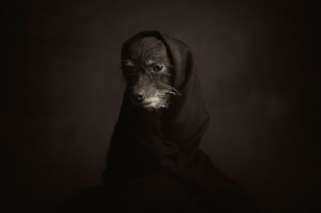 Weirdly emotional photo series of animals show their human side