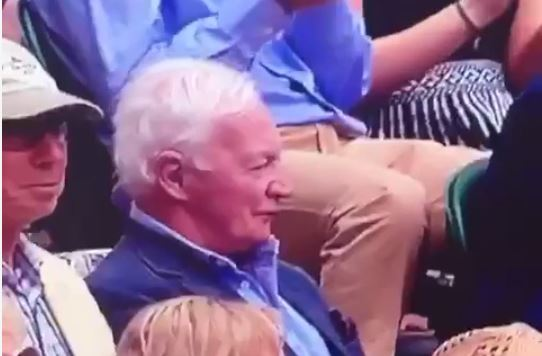 Tennis fan goes viral after appearing to eat earwax during Andy Murray match at Wimbledon 2015