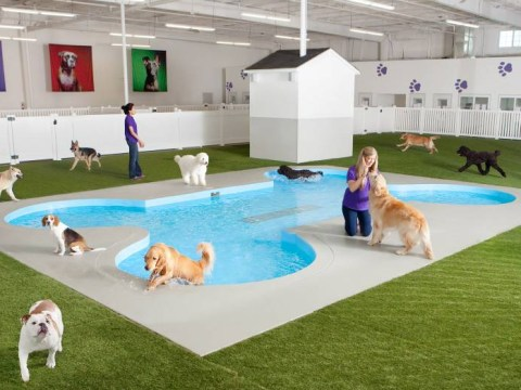 Your pet is about to get better airport treatment than you