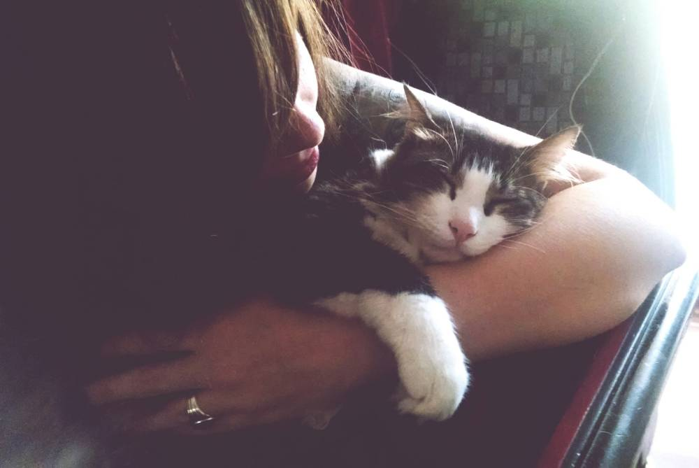 25 signs you like cats more than people