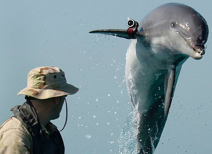 Hamas 'catches Israeli spy dolphin' off coast of Gaza
