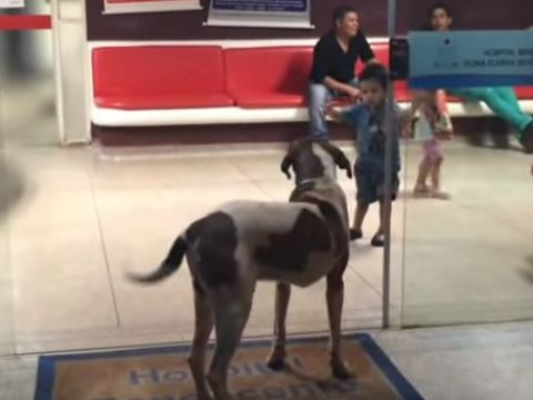 Loyal dog refused to leave hospital where owner was being treated