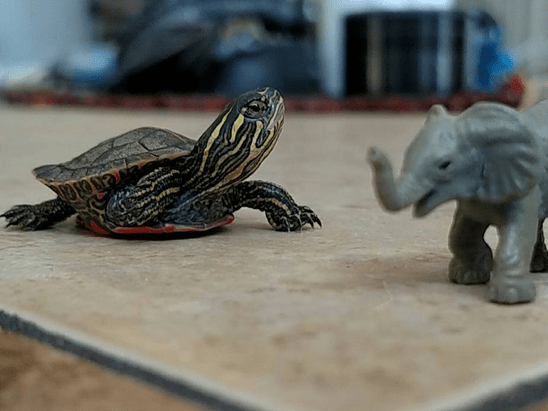 The cutest turtle you'll ever see just scored a book deal
