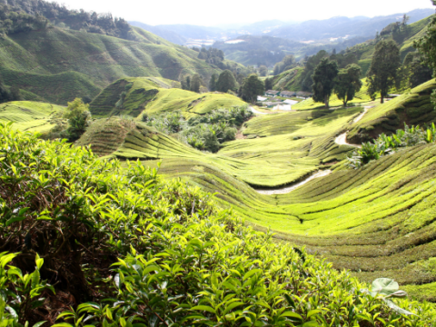 10 places all tea lovers should have on their travel bucket list