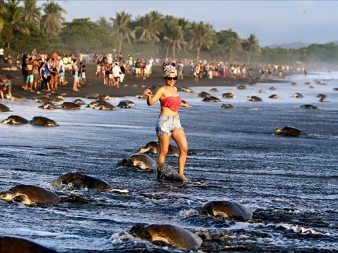 Tourists taking selfies stopped endangered sea turtles from breeding