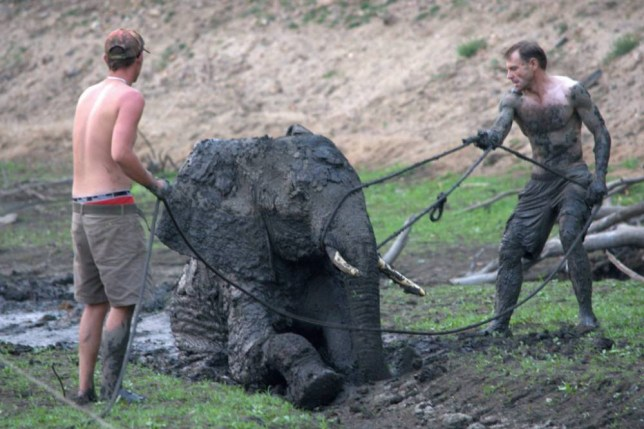 Pictures taken from open facebook account of Melissa Mackenzie Album 'elephant rescue' in Zimbabwe https://www.facebook.com/melissa.mackenzie.12/media_set?set=a.893647470703434.1073741840.100001745682849&type=3&pnref=story Awaiting permission for use. Credit: Melissa Mackenzie