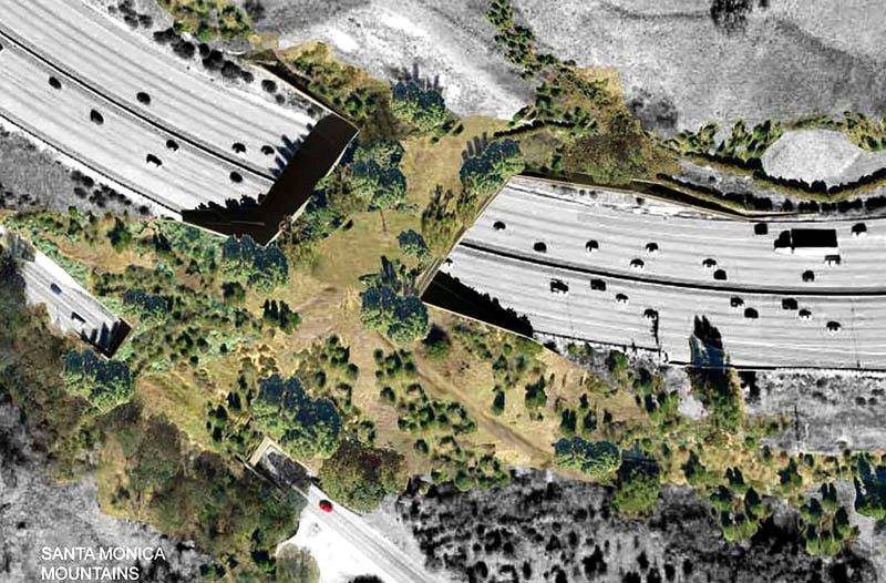 There is going to be a massive bridge so that animals can cross the road safely