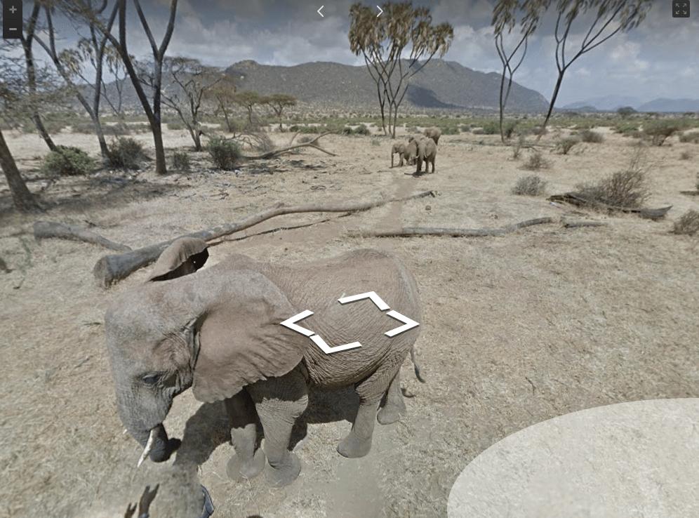 A young elephant in Samburu