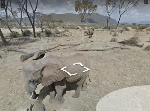 Google Street View now lets you walk alongside elephants