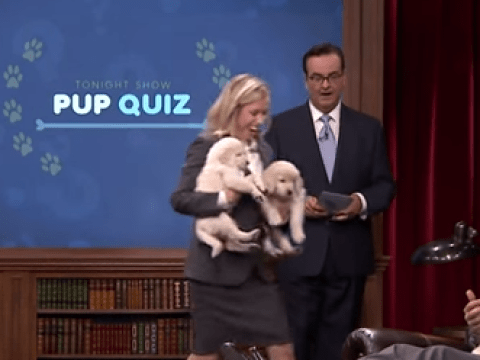 You'll either love or hate Jimmy Fallon and Kaley Cuoco-Sweeting's pup-quiz puppy-fest