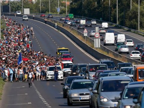 Thousands of refugees take to motorway to walk to Austria from Hungary