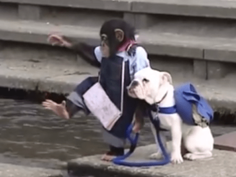 Just a monkey and a bulldog crossing a river together