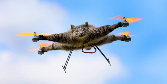 """Mandatory Credit: Photo by REX Shutterstock (4243860w).. 'Orvillecopter' in flight.. Artist turns his dead cat into remote controlled helicopter, London, Britain - Jun 2014.. When your beloved pet dies what do you do? Well if you're Dutch artist Bart Jansen you turn them into a cat copter. When Bart's 4-year-old cat Orville was run over and killed he made the controversial decision to turn his body into a quadcopter. Enlisting the help of engineer Arjen Beltman, Orville was preserved by a taxidermist before propellers were mounted to his four outstretched paws so he could be flown by remote control. The ended result, dubbed an Orvillecopter, was first put on show several years ago at the Kunstrai art festival in Amsterdam and recently featured in a Channel 4 TV documentary about taxidermy called 'All Creatures Great And Stuffed'. At the time his creation was unveiled, Jansen, who described the Orvillecopter as """"half cat, half machine,"""" commented: """"After a period of mourning, he [Orville] received his propellers posthumously""""..."""