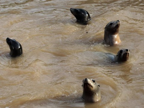 Animals left in pools of muddy water after devastating flash floods