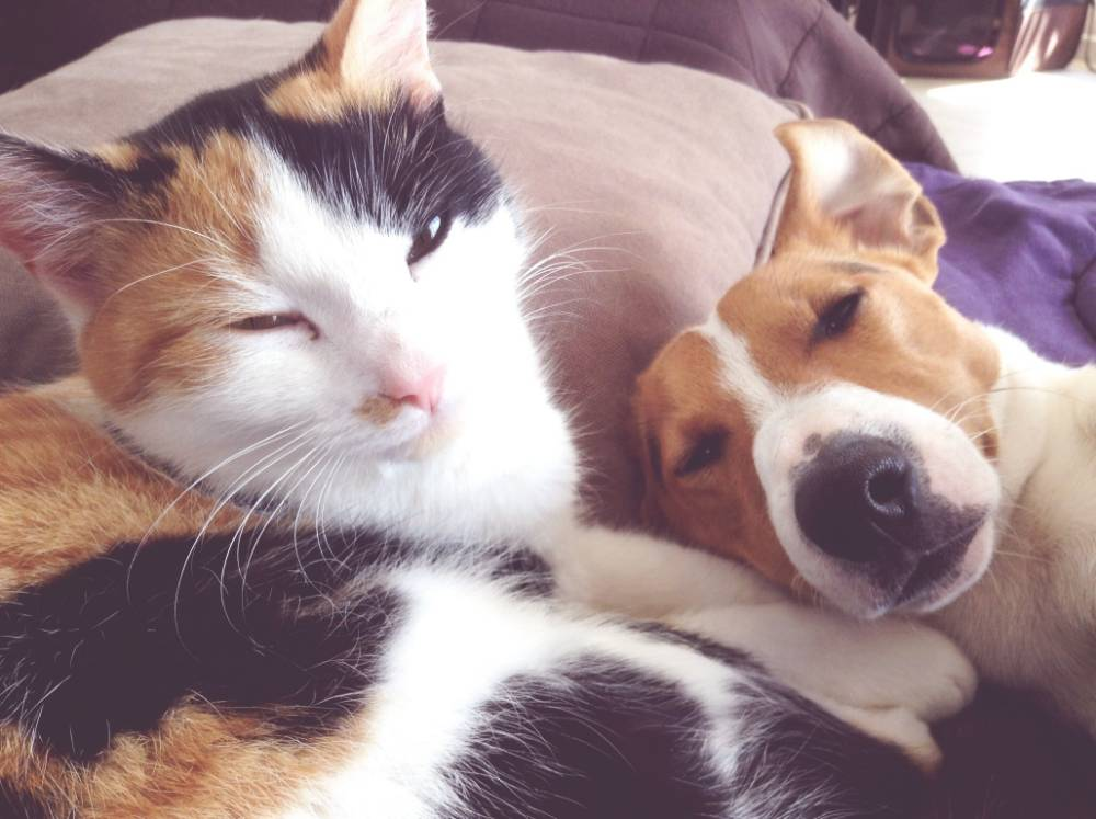 Close-Up Of Cat With Dog Resting On Bed