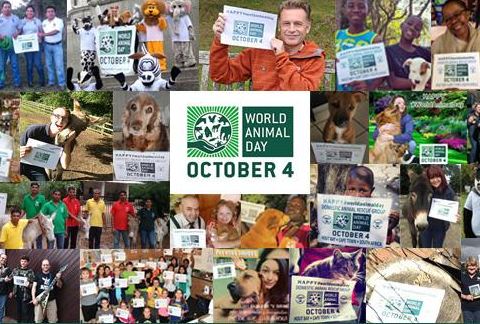 It's World Animal Day: Here are 9 things you didn't know