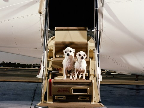 Ryanair are considering letting small dogs in the cabins on their short haul flights