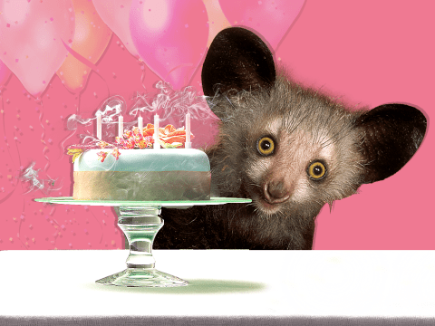 Tiny baby aye-aye has her first weigh in and she's totally adorable
