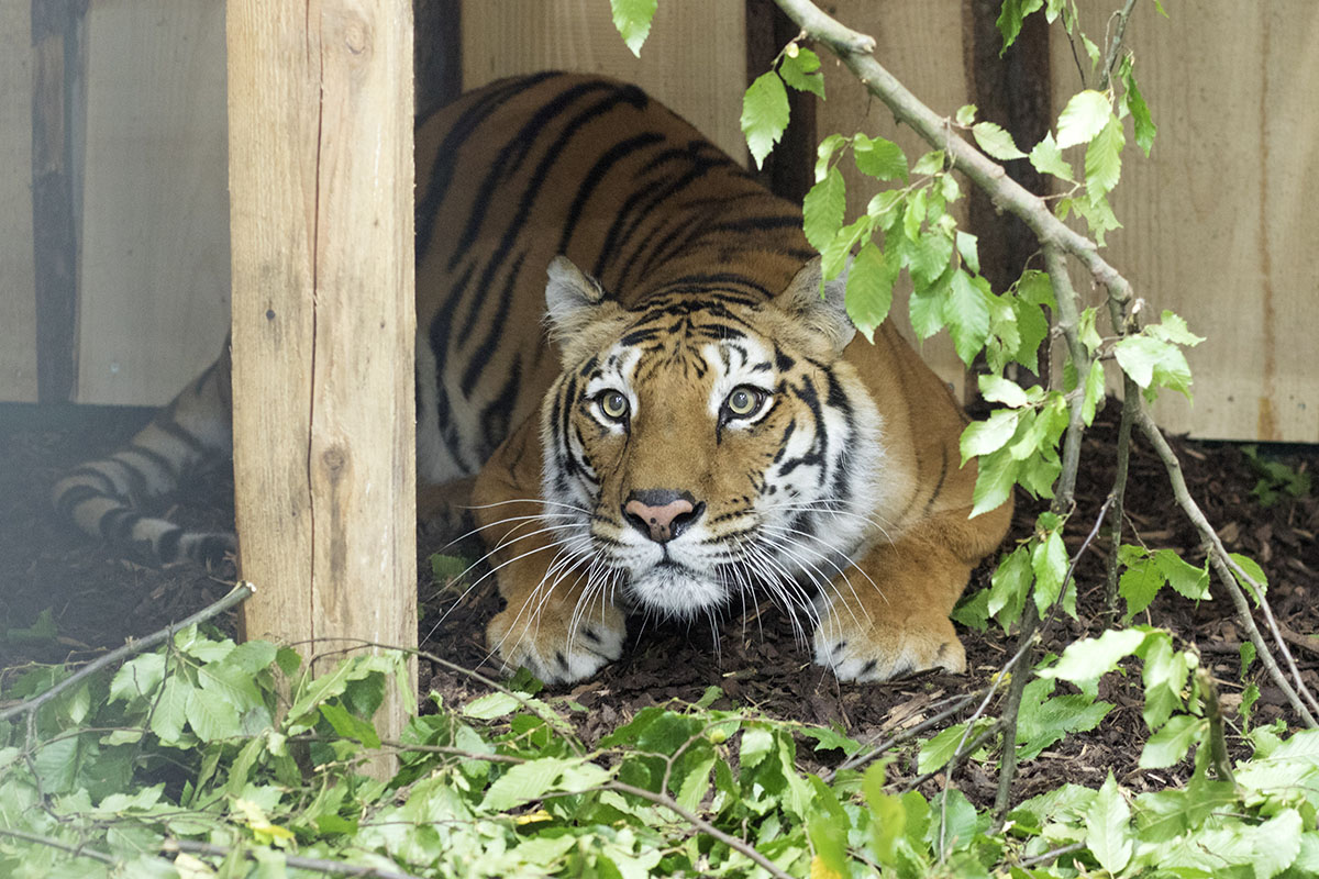 Varvara has spent her whole life in captivity (Picture: Hristo Vladev/Four Paws)