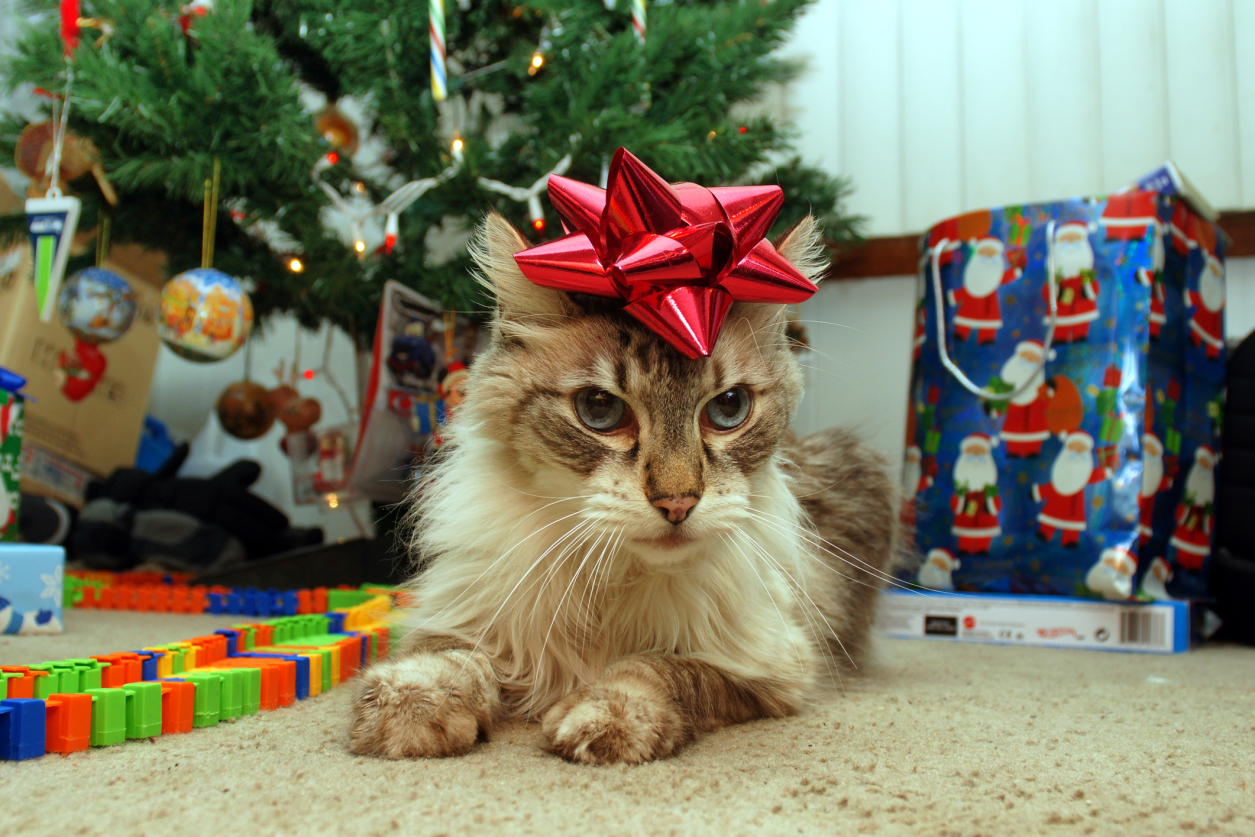 19 cats who are sad it's Christmas