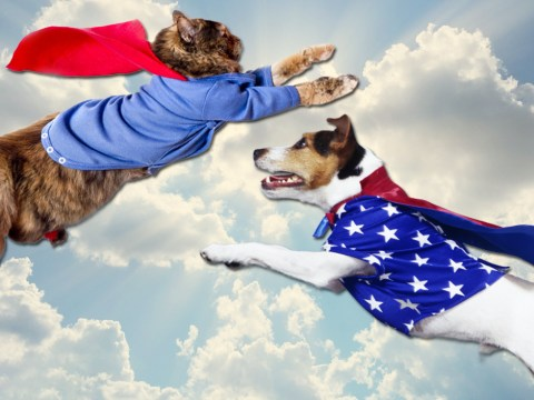 6 of the most heroic animals ever