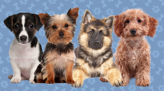 Quiz: What dog breed are you? Credit: Getty Images
