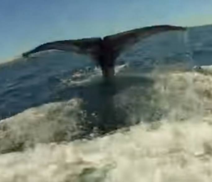 Giant whale cut free from fishing line in California