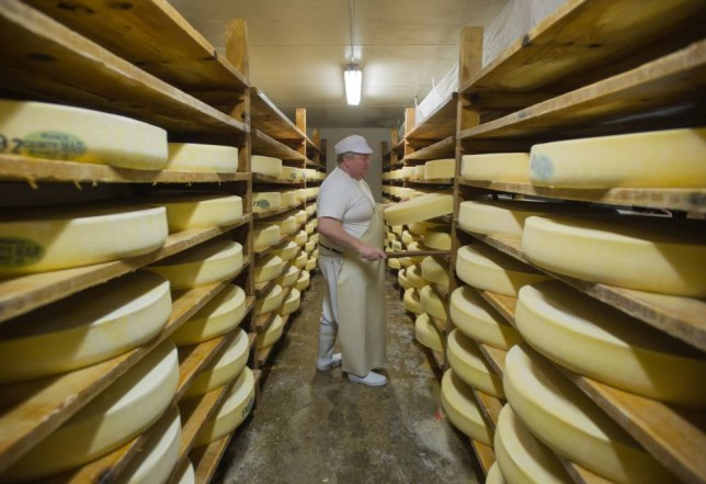 A master cheese maker controls Comte cheeses into the maturing cheese cellar on March 11, 2015 in Loray, eastern France. Thanks to the protection granted by the AOP (Original Protected Name) certification for the Comte cheese and the Morteau sausage, the farmers within this sector are not afraid of the end of the milk quotas planned on April 1, 2015. AFP PHOTO / SEBASTIEN BOZON        (Photo credit should read SEBASTIEN BOZON/AFP/Getty Images)