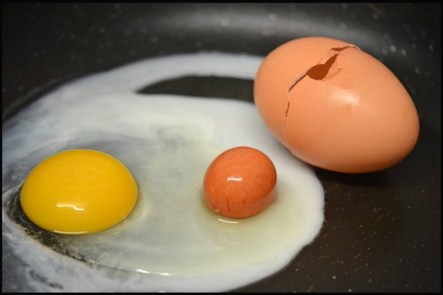 BNPS.co.uk (01202 558833) Pic: ChrisKeast/BNPS Eggs-tra, eggs-tra! Smallholder Chris Keast thought his wife was cracking up when she broke open an egg and found another one perfectly intact inside. Jane Keast chose the extra-large egg to have for the couple's tea but was shell-shocked when the second one rolled out into her frying pan at their home in Perrenporth, Cornwall.