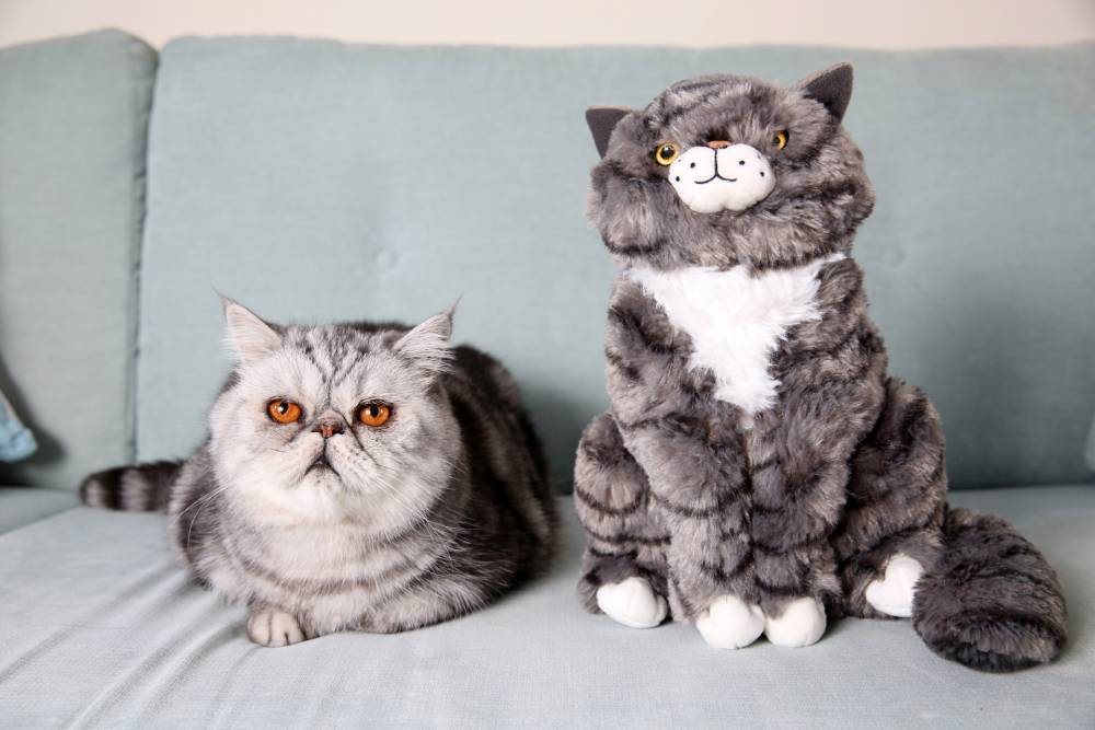 This cat looks just like Mog from the Christmas ad, but he isn't happy about it