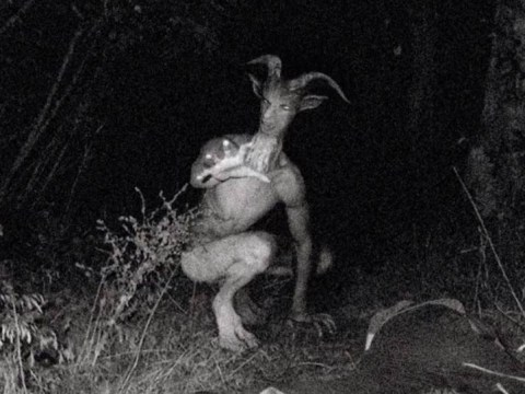 People are going crazy over sightings of the Goatman