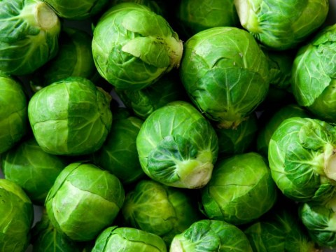 This year's Brussels sprouts are going to be MASSIVE