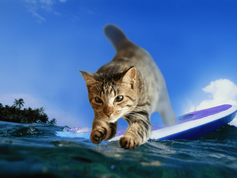 Cat owners trick their pet into surfing down the stairs