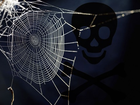 British scientists are spraying spider webs with ebola and the Black Death
