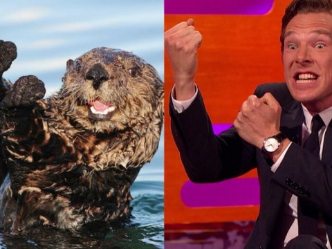 Benedict Cumberbatch just managed a perfect otter impression (with the help of Johnny Depp)