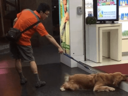 This dog is very upset about his favourite person moving away for university