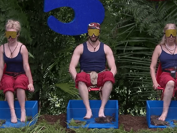 Was this I'm A Celeb trial fixed? Viewers notice crabs with claws TAPED UP during challenge