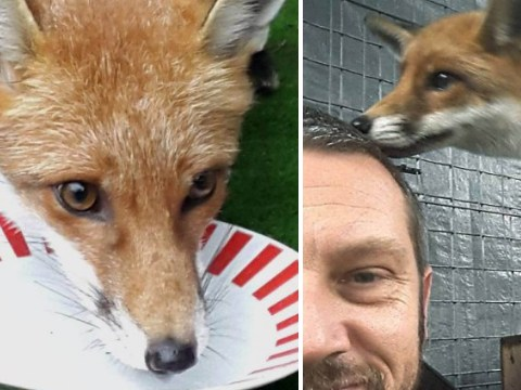 Family ordered to surrender pet fox to the RSPCA