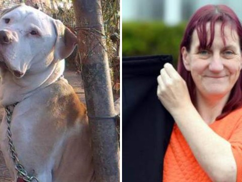 Dog attack victim says being overweight saved her life