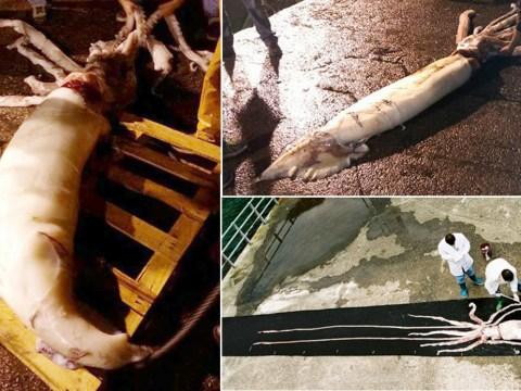 Fishermen catch 150kg giant squid measuring 10m long off coast of Spain